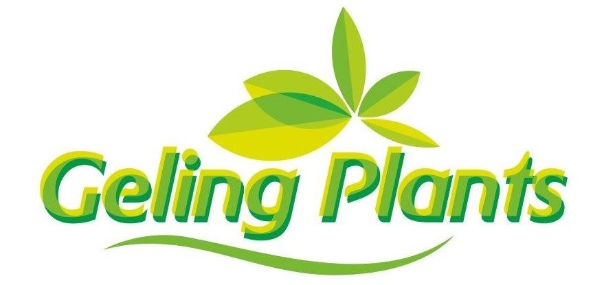 Geling Plants